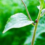 This is an image of a lady bug on a leaf.