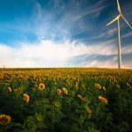 This is an image of a field of flowers with a windmill.