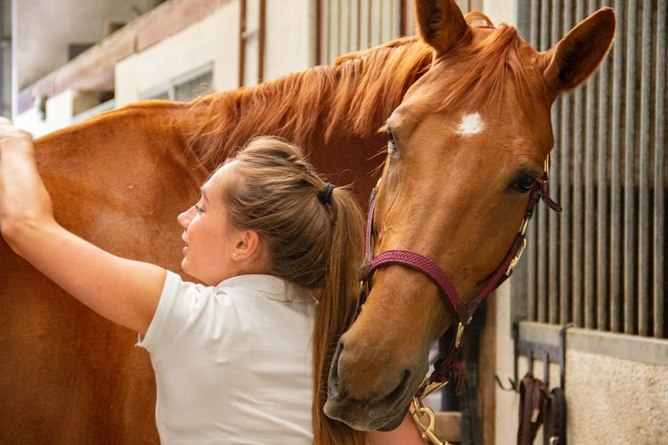 This is an image of a veterinarian working on a horse.