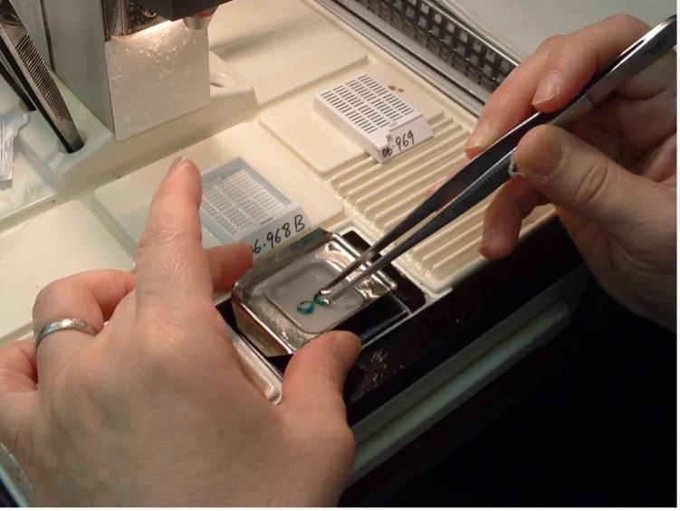 This image shows tissue specimen preparation.